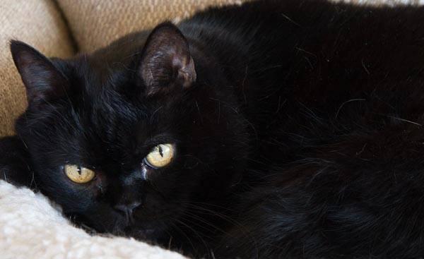 "perfect ""visual"" exposure, cat in the deep shadow tones"
