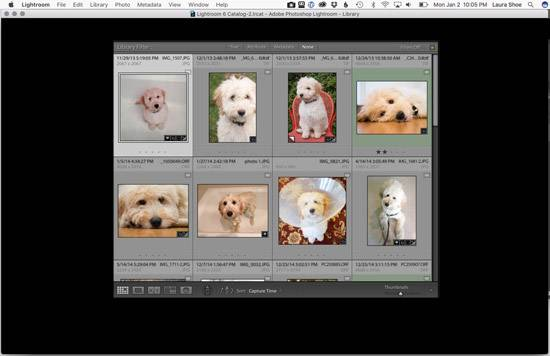 Have Your Lightroom Panels Gone Black? | Laura Shoe's